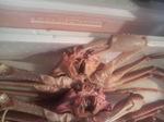 牡蠣その1